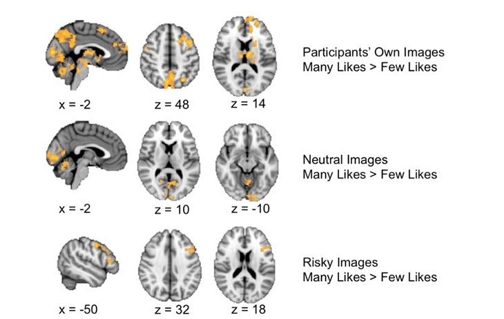 730_social_brain_responses